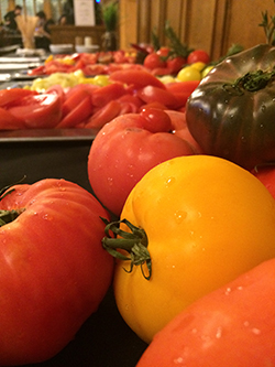 Variety of tomatos at the tomato tasting event in Strachan Hall