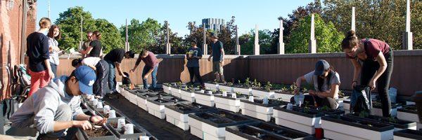 Volunteers planting seeds on the Trinity's rooftop garden