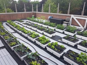 Rooftop Biotop Planters