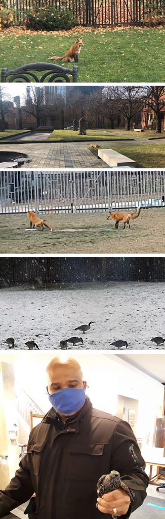 animals spotted on campus